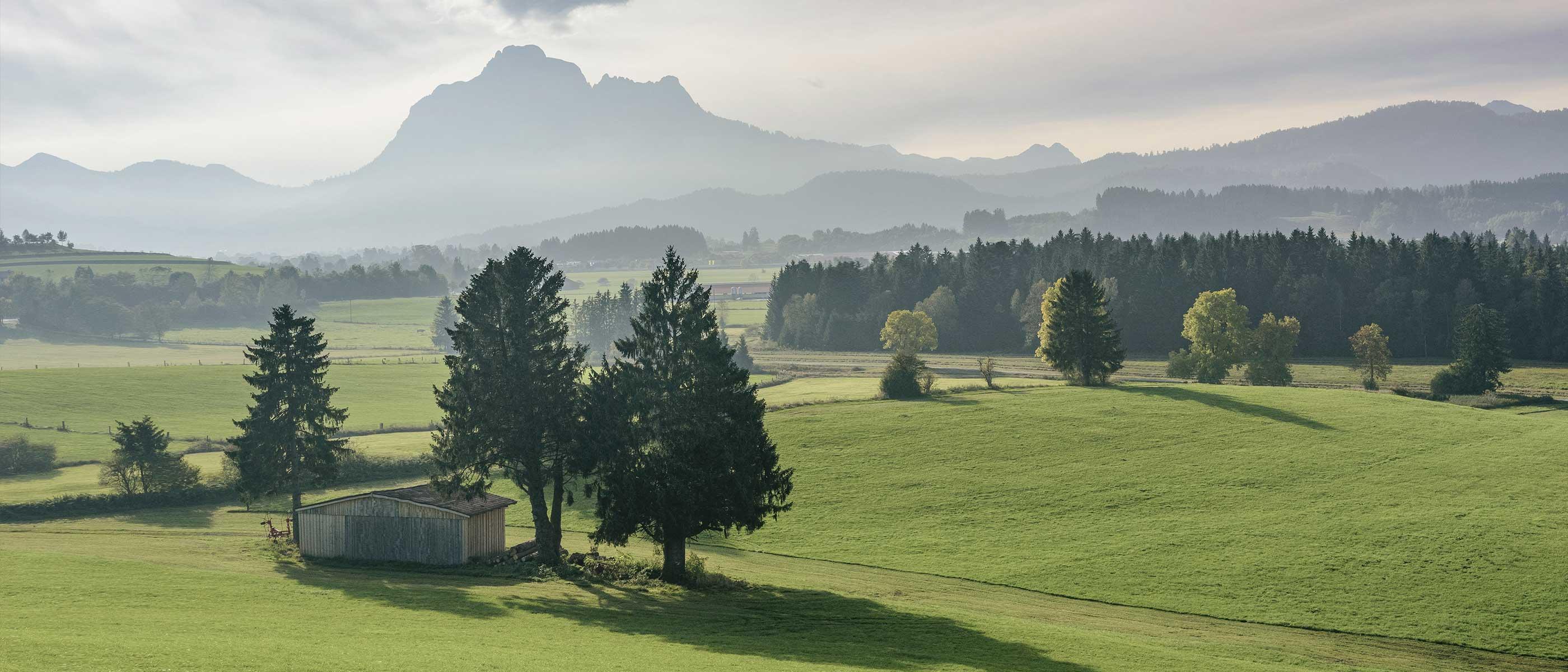 Holz zum Bauen aus der Region Unterallgäu